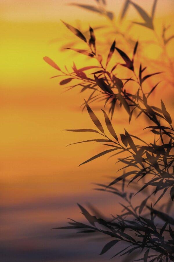 reiki bamboo
